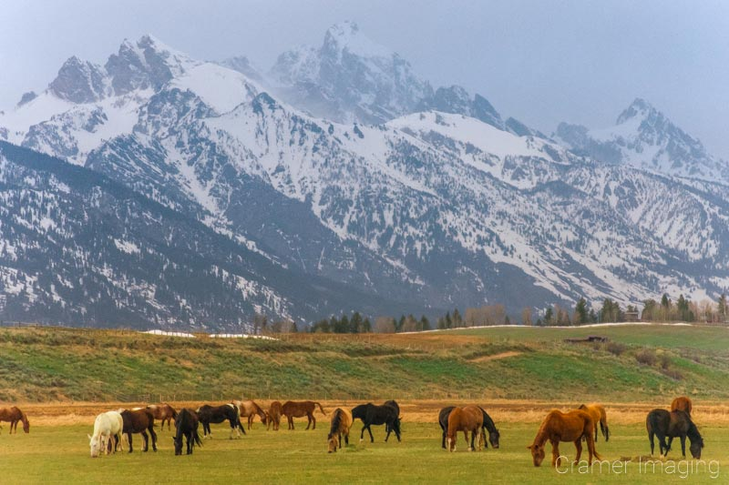 Photo Story: Tetons And Horses By Audrey Cramer